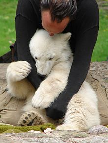 photo of Knut