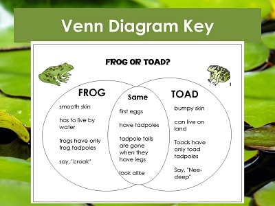 frog-or-toad-powerpoint-slide (12)