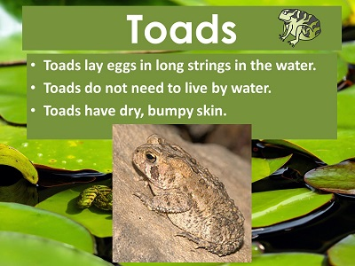 Frog or Toad? Free Resources