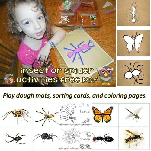 insects-spiders-sorting-cards-clay-and-coloring-pages