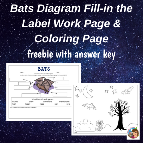Free Printable Bat Diagram Work Page