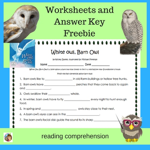 white-owl-barn-owl-reading-comprehension-worksheets-freebie