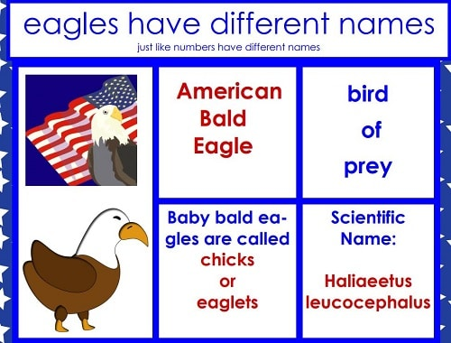 Eagles-have-different-names
