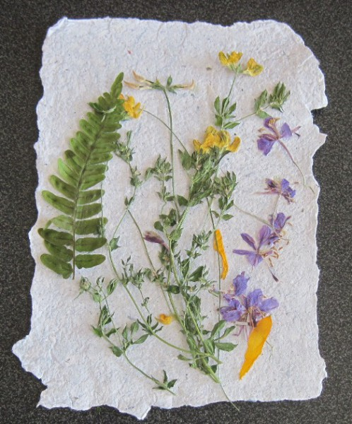 Pressed Flowers and Leaves Craft