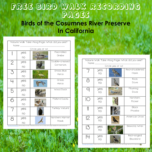 Observing birds in California Free Printable