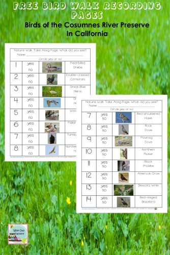 bird-walk-recording-pages-for-California-reserve