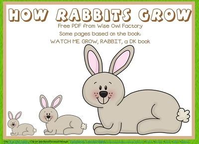 Rabbit Nonfiction Printable Free Work Pages PDF