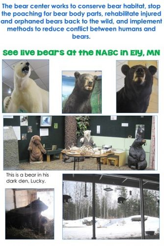 Free Bears Fiction and Nonfiction Writing Frames Printable