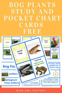 bog-plants-study-and-pocket-chart-cards-freebie
