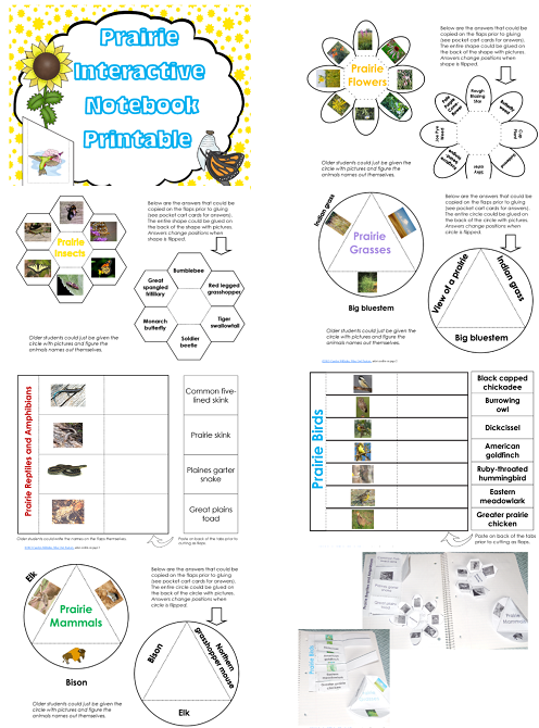 Free Plant a Pocket of Prairie ISN Foldables Printable
