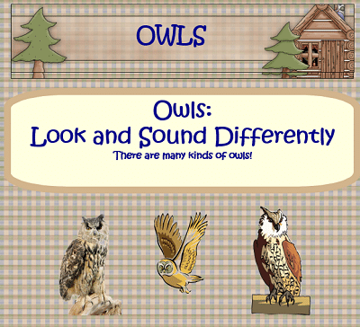 free-owls-Power-Point-and-PDFs-for-student-graphing
