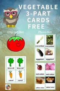 vegetable-3-part-cards-set-Montessori-inspired-freebie