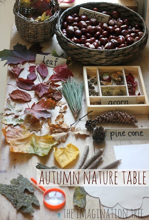 Autumn-Nature-Exploration-Table