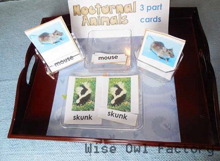 English-Nocturnal-Animals-3-part-cards-free