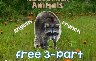 Nocturnal-Animals-English+French-3-part-cards-printable