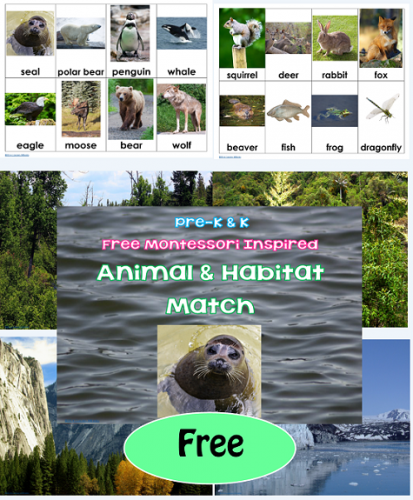 free pre-k and k animal habitat match