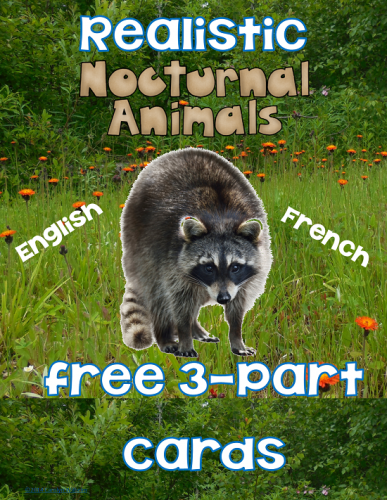 Nocturnal Animal 3-Part Cards Freebie
