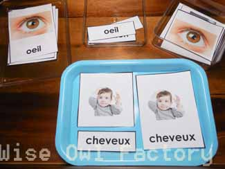 3-part-cards-my-body-in-French