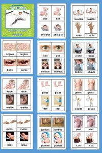 my-body-3-part-cards-French-English-freebie