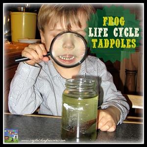 frog-life-cycle-2-tadpoles