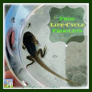 frog-life-cycle-3-froglets