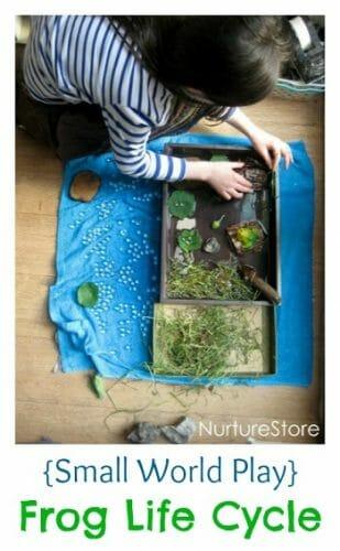 small-world-play-frog-life-cycle
