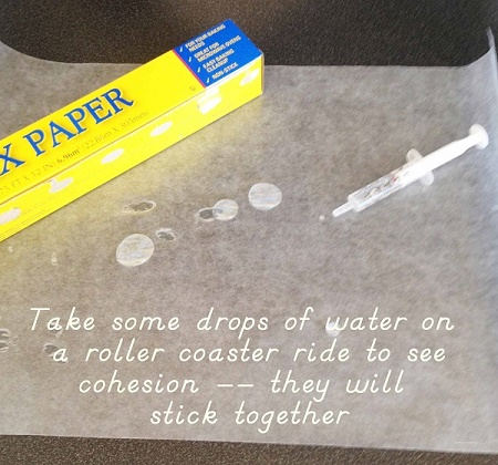take drops of water on a roller coaster ride to demonstrate cohesion, activity in free printable