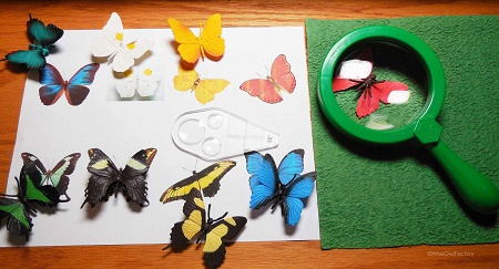 first-children-observe-butterflies-with-magnifying-glass