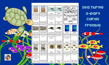 sea-turtles-Montessori-printable