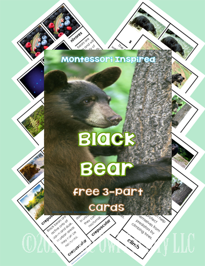 Bear Theme 3-Part Cards