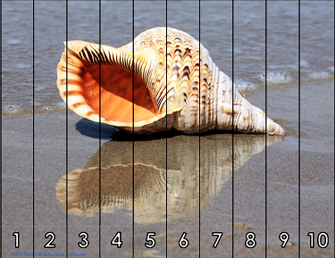 free-skip-counting-shells-puzzles
