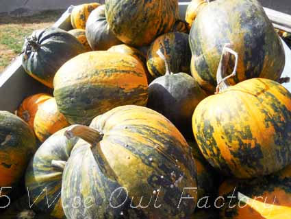 multi-colored-pumpkins