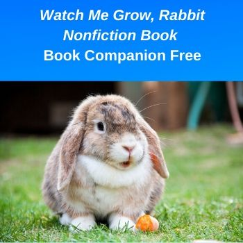 Rabbit Nonfiction Printable Free Work Pages PDF