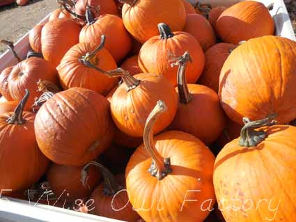 orange-pumpkins