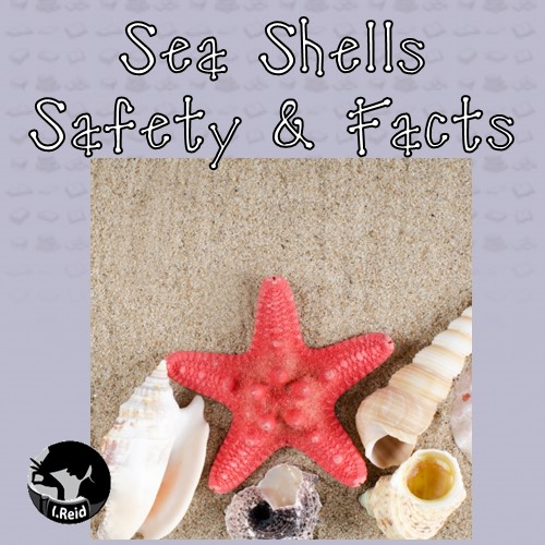 sea-shells-safety-and-facts