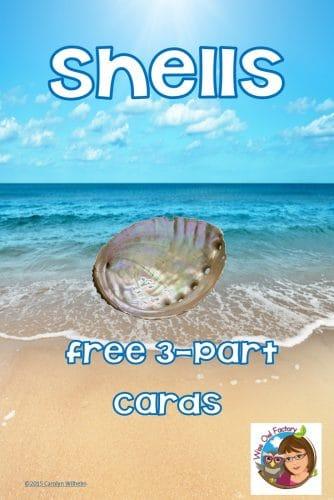 shells-Montessori-inspired-3-part-cards-freebie-download