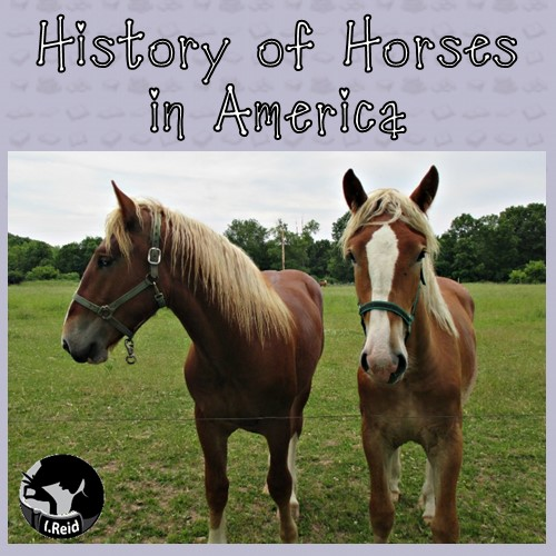 history-of-horses-in-America