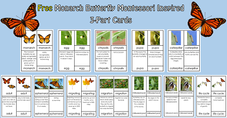 Monarch-butterfly-free-3-part-cards-pgs