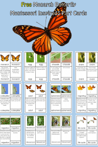 3-part-cards-Monarch-butterfly-free-printable