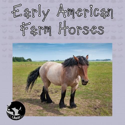 American-Farm-Horses