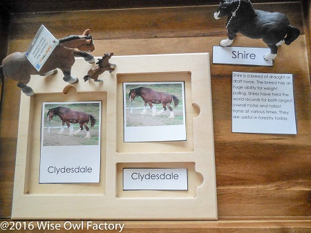 Horses-3-part-cards-information on a tray