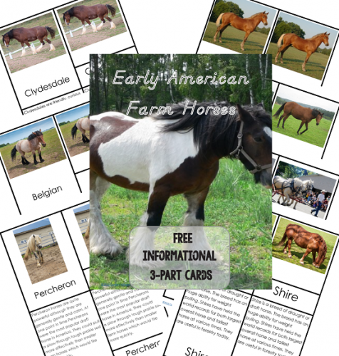Horses-3-part-cards-with-information-pages-included