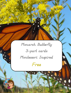 Monarch butterfly 3-part-cards-Montessori free printable