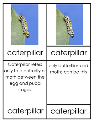 Monarch Butterfly Monarch-butterfly-3-part-cards-caterpillar