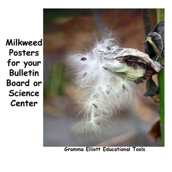 Posters-of-Milkweed-Photos-Favorite-Plant-of-the-Monarch-Butterfly