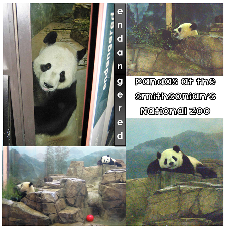 Smithsonian-National-Zoo-Panda-Exhibit