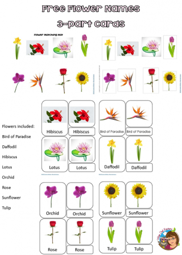 Flower Name free-flower-names-cards-preview