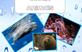 ocean animals Montessori inspired 3-part cards free