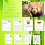 Red Panda Fiction and Nonfiction Writing Frames