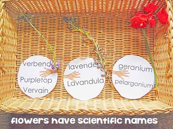 flowers-have-scientific-names